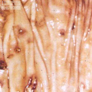 Disgusted Geist / Medicine Noose – Split